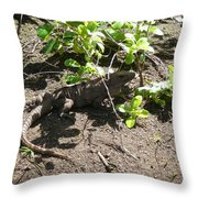 Wild Iguana Finding Shade 2 Throw Pillow