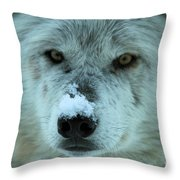 Wild Intensity Throw Pillow
