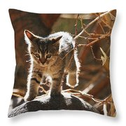 Wild Kitten Happy To Be Alive Throw Pillow