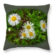 Wild Miniature Daisies Throw Pillow