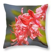 Wild Pink Azalea At Moore State Park Throw Pillow