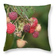 Wild Raspberrys Throw Pillow