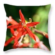 Wild Red Throw Pillow