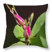 Wild Rose Buds Throw Pillow