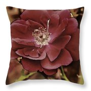 Wild Rose Iv Throw Pillow