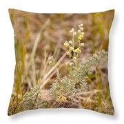 Wild Sage Wormwood Artemisia Figida Yellow Flower Throw Pillow