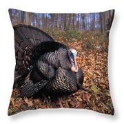 Wild Turkey Displaying Throw Pillow by Len Rue Jr
