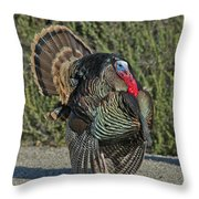 Wild Turkey Tom Throw Pillow