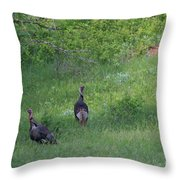 Wild Turkeys In Grass  In Kansas Throw Pillow by Robert D  Brozek