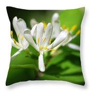 White Honeysuckle Flowers Throw Pillow