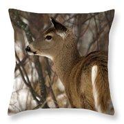 Wild White-tailed Deer Throw Pillow