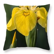 Wild Yellow Iris Throw Pillow