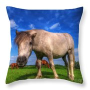 Wild Young Horse On The Field Throw Pillow