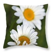Wildflower Named Oxeye Daisy Throw Pillow