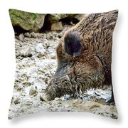 Wildschwein Throw Pillow