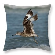 Willet In Flight Showing Wing Molt Throw Pillow