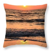 Willet In The Spotlight Throw Pillow