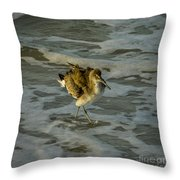 Willet Washing 1 Throw Pillow