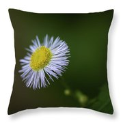 Willow Aster Throw Pillow