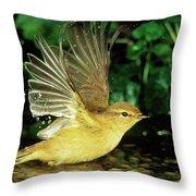 Willow Warbler Phylloscopus Trochilus Throw Pillow