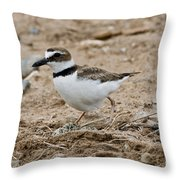 Wilsons Plover At Nest Throw Pillow