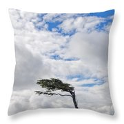 Wind-bent Flag Tree In Tierra Del Fuego Throw Pillow