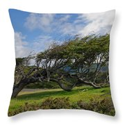 Wind-bent Tree In Tierra Del Fuego Patagonia  Throw Pillow