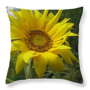 Windblown Sunflower Two Throw Pillow