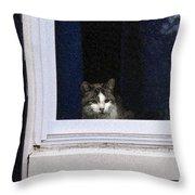 Window Cat Throw Pillow