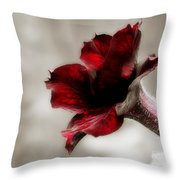 Wine Colored Petunia Throw Pillow