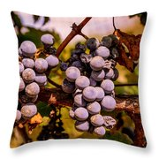Wine Grapes On The Vine Throw Pillow