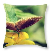 Wing Check Throw Pillow