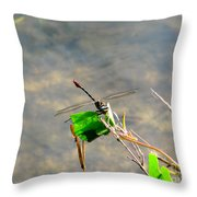 Winged Critter Throw Pillow
