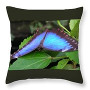 Wings Of Beauty Throw Pillow
