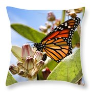 Wings Up Monarch Butterfly By Diana Sainz Throw Pillow