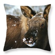 Winter Baby Throw Pillow