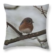 Winter Blue Bird 1 Throw Pillow