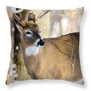 Winter Buck Throw Pillow by Steven Santamour