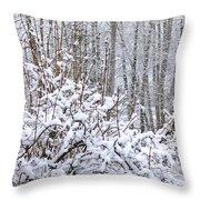 Winter Haven 2 Throw Pillow