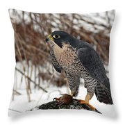 Winter Hunt Peregrine Falcon In The Snow Throw Pillow