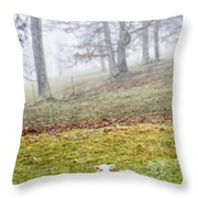 Winter Lamb Foggy Day Throw Pillow