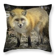 Winter Nature At Howell Nature Center Throw Pillow