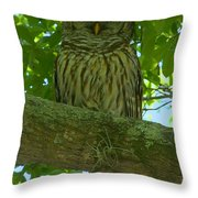 Winter Park Owl Throw Pillow