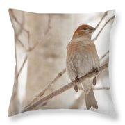 Winter Pine Grosbeak Throw Pillow