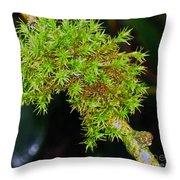 Winter Rains Make  Happy Moss Throw Pillow