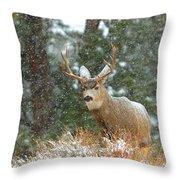 Winter Returns Throw Pillow