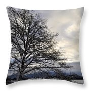 Winter Tree Photograph By Cathy Mahnke