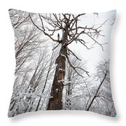 Winter Tree Perspective Throw Pillow