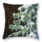 Winter Tree Sierra Nevada Mts Ca Usa Throw Pillow