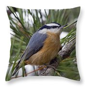 Winter Visitor - Red Breasted Nuthatch Throw Pillow